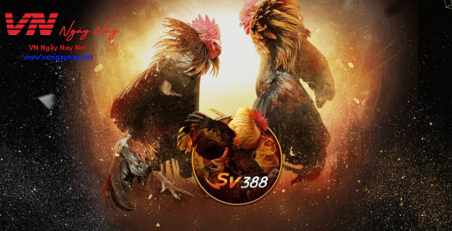 Đá gà trực tuyến ST666